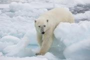 Arctic-016