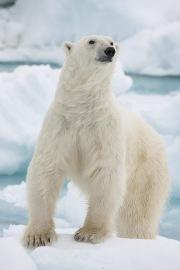 Arctic-017