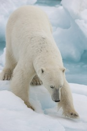 Arctic-019