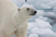Arctic-021
