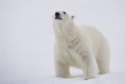 Arctic-038