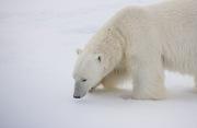 Arctic-041
