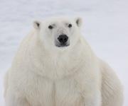 Arctic-042