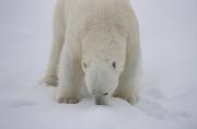 Arctic-051