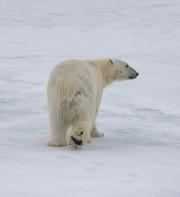 Arctic-052