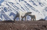 Arctic-065