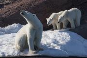 Arctic-074