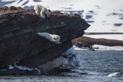 Arctic-078