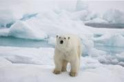 Arctic-002