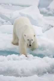 Arctic-004