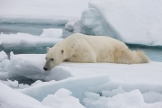 Arctic-012