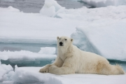 Arctic-013