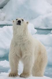 Arctic-018