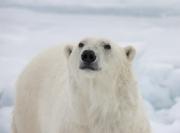Arctic-020