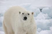 Arctic-022
