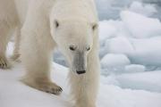 Arctic-023