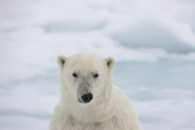 Arctic-024