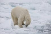 Arctic-025