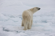 Arctic-026