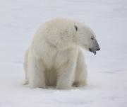 Arctic-037