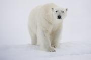 Arctic-039