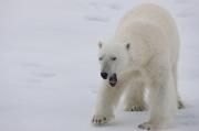 Arctic-040
