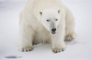 Arctic-043