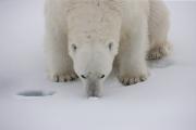 Arctic-044