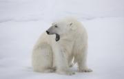 Arctic-045
