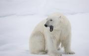Arctic-046