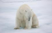 Arctic-047