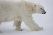 Arctic-048