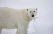 Arctic-049