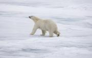 Arctic-053