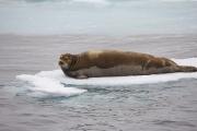 Arctic-054