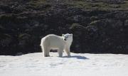 Arctic-063