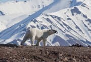 Arctic-064