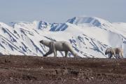 Arctic-066