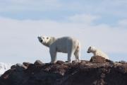 Arctic-068