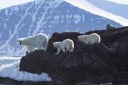 Arctic-069