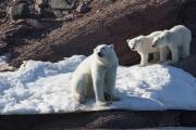 Arctic-073
