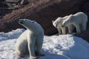 Arctic-075
