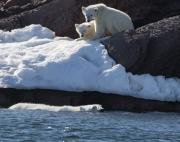 Arctic-076