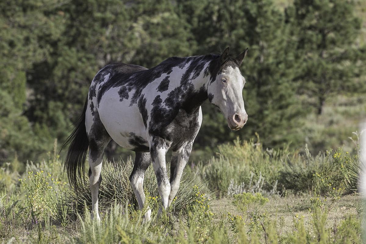 Black Hills Wild Horse Sanctuary Archives Living Images