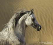 DesertHorses-022