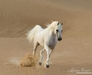 DesertHorses-028