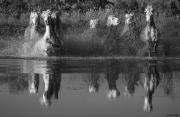 fineart-211-MirrorintheWater