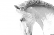 fineart-214-Stallion'sCurve