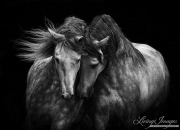 fineart-243-TwoGreyBrothers