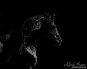 fineart-264-StallionsDarkProfile